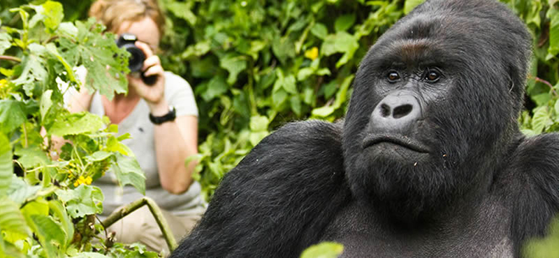 Best Time for Gorilla Trekking in Uganda